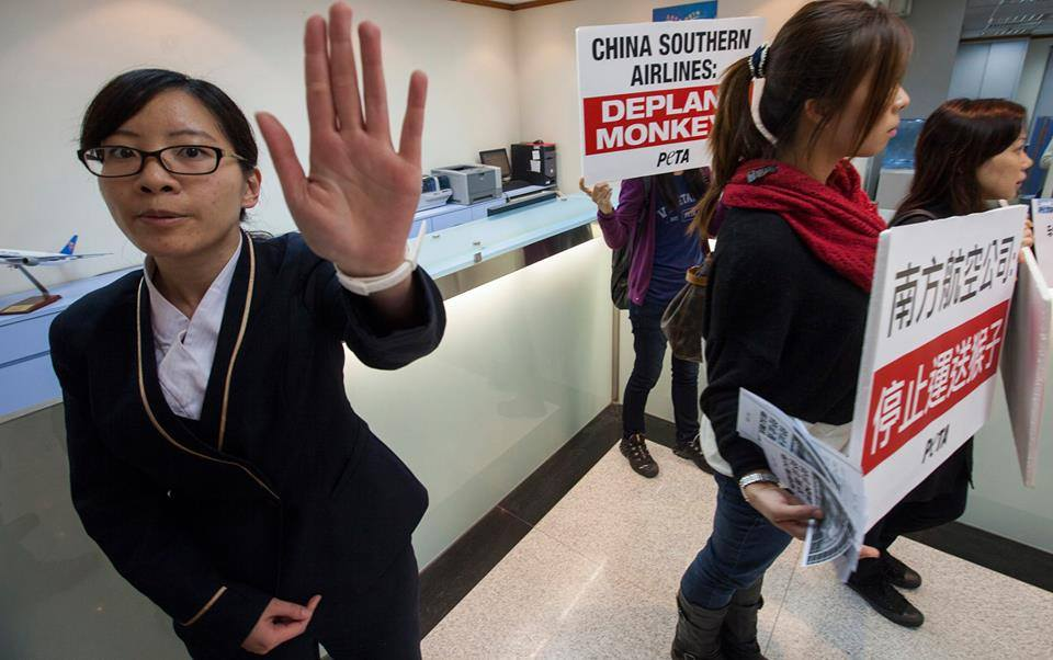 China Southern Airline protests primates