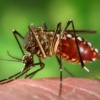 Dengue, chikungunya rise among UK travellers to India