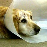 Pets used as pawns in domestic violence