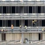 Illegal Indian workers in Saudi Arabia desperate to return home
